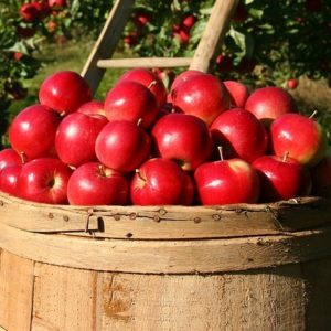 Vermont Apples and Syrup